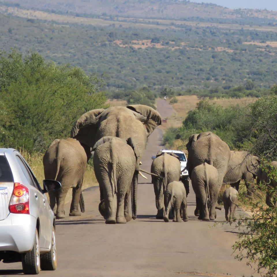 travel south africa, african safari, african elephants, travel to south africa