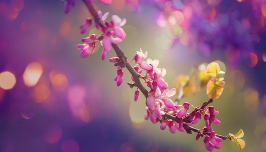 inspiration-redbud-tree